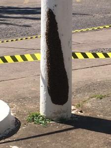 Os enxames estão espalhados em vários pontos da cidade, em residências, postes, árvores, escolas e etc